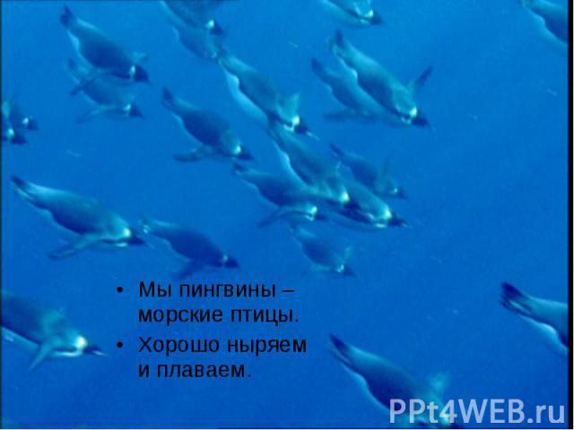 Мы пингвины – морские птицы. Мы пингвины – морские птицы. Хорошо ныряем и плаваем.