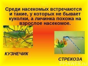 НО ! НО ! Среди насекомых встречаются и такие, у которых не бывает куколки, а ли