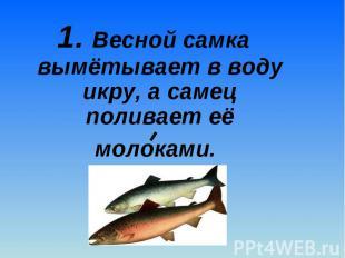 1. Весной самка вымётывает в воду икру, а самец поливает её молоками. 1. Весной