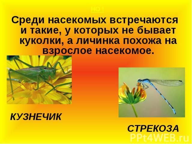 НО ! НО ! Среди насекомых встречаются и такие, у которых не бывает куколки, а личинка похожа на взрослое насекомое. КУЗНЕЧИК СТРЕКОЗА