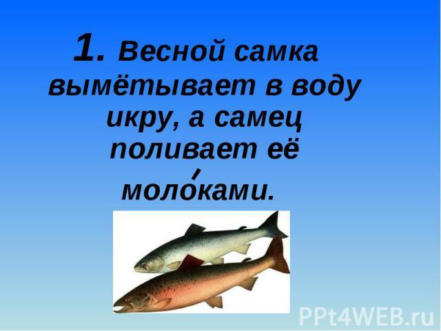 1. Весной самка вымётывает в воду икру, а самец поливает её молоками. 1. Весной самка вымётывает в воду икру, а самец поливает её молоками.