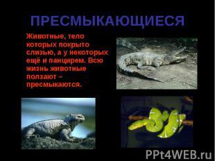 Животные, тело которых покрыто слизью, а у некоторых ещё и панцирем. Всю жизнь ж