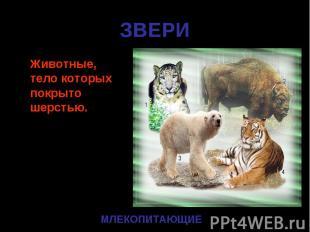 Животные, тело которых покрыто шерстью. Животные, тело которых покрыто шерстью.