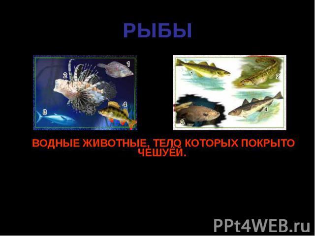 ВОДНЫЕ ЖИВОТНЫЕ, ТЕЛО КОТОРЫХ ПОКРЫТО ЧЕШУЁЙ. ВОДНЫЕ ЖИВОТНЫЕ, ТЕЛО КОТОРЫХ ПОКРЫТО ЧЕШУЁЙ. Передвигаться им помогают плавники. С помощью жабр рыбы дышат кислородом, растворенным в воде.