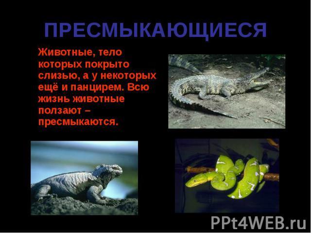 Животные, тело которых покрыто слизью, а у некоторых ещё и панцирем. Всю жизнь животные ползают – пресмыкаются. Животные, тело которых покрыто слизью, а у некоторых ещё и панцирем. Всю жизнь животные ползают – пресмыкаются.