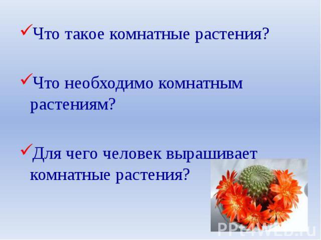Что такое комнатные растения? Что такое комнатные растения? Что необходимо комнатным растениям? Для чего человек выращивает комнатные растения?
