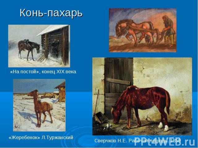 Конь-пахарь
