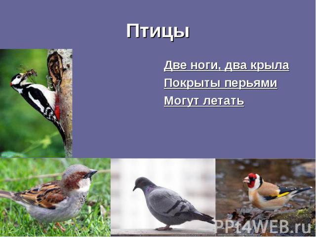 Две ноги, два крыла Две ноги, два крыла Покрыты перьями Могут летать