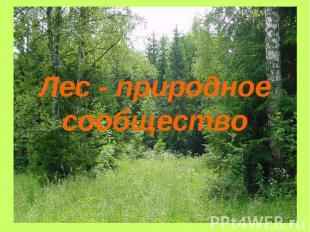Лес - природное сообщество