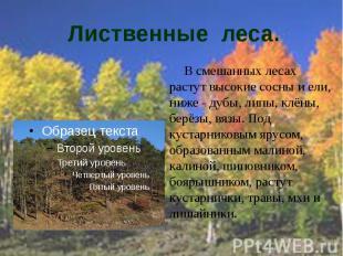 Лиственные леса. В смешанных лесах растут высокие сосны и ели, ниже - дубы, липы