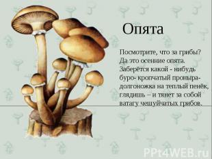 Посмотрите, что за грибы? Да это осенние опята. Заберётся какой - нибудь буро- к