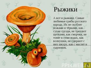 А вот и рыжики. Самые любимые грибы русского народа. Их не скоблят ножами и тёрк