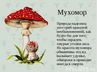 Природа наделила этот гриб красотой необыкновенной, как будто бы для того, чтобы