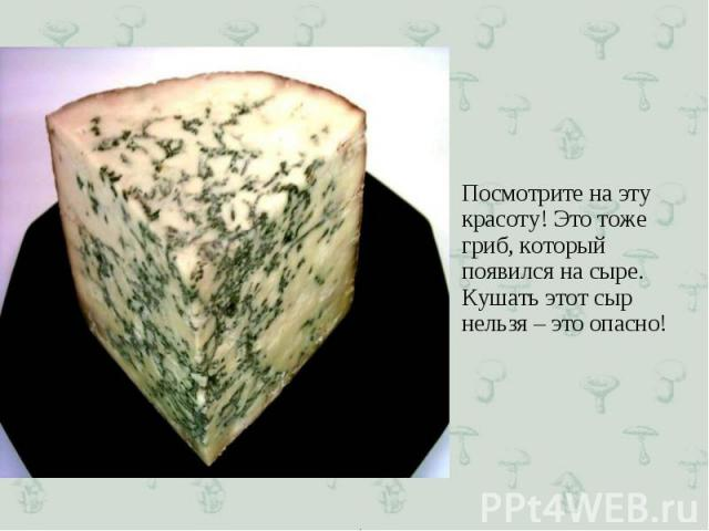 Посмотрите на эту красоту! Это тоже гриб, который появился на сыре. Кушать этот сыр нельзя – это опасно! Посмотрите на эту красоту! Это тоже гриб, который появился на сыре. Кушать этот сыр нельзя – это опасно!