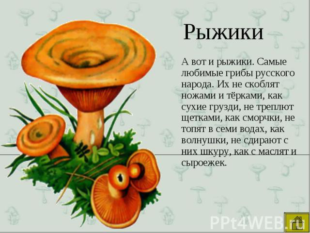 А вот и рыжики. Самые любимые грибы русского народа. Их не скоблят ножами и тёрками, как сухие грузди, не треплют щетками, как сморчки, не топят в семи водах, как волнушки, не сдирают с них шкуру, как с маслят и сыроежек. А вот и рыжики. Самые любим…