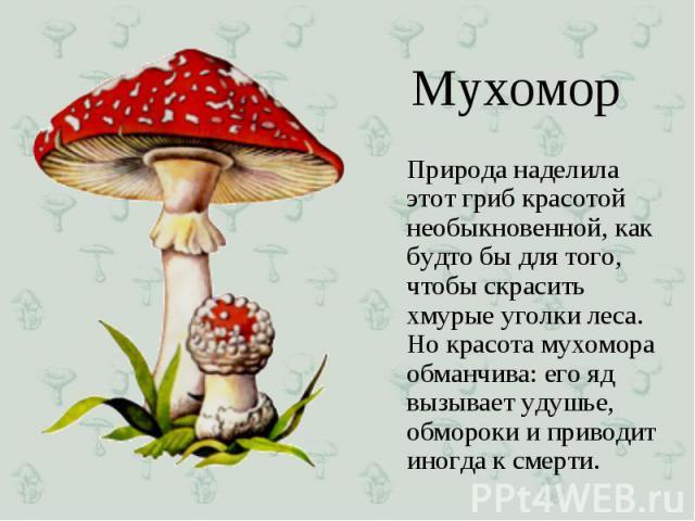 Природа наделила этот гриб красотой необыкновенной, как будто бы для того, чтобы скрасить хмурые уголки леса. Но красота мухомора обманчива: его яд вызывает удушье, обмороки и приводит иногда к смерти. Природа наделила этот гриб красотой необыкновен…
