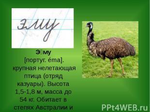 Э му [португ. éma]. крупная нелетающая птица (отряд казуары). Высота 1,5-1,8 м,