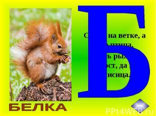 Сидит на ветке, а не птица, Есть рыжий хвост, да не лисица.
