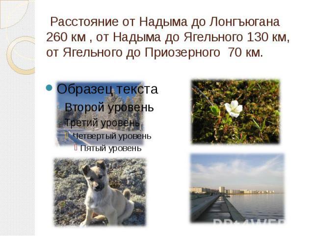 Расстояние от Надыма до Лонгъюгана 260 км , от Надыма до Ягельного 130 км, от Ягельного до Приозерного 70 км.
