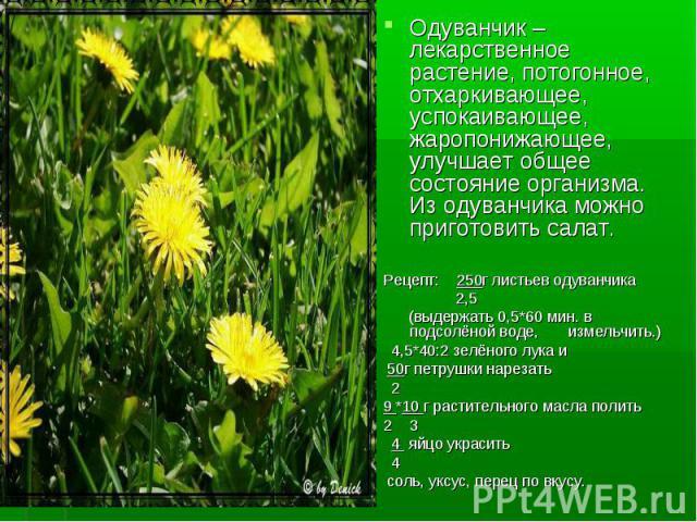 Одуванчик – лекарственное растение, потогонное, отхаркивающее, успокаивающее, жаропонижающее, улучшает общее состояние организма. Из одуванчика можно приготовить салат. Одуванчик – лекарственное растение, потогонное, отхаркивающее, успокаивающее, жа…
