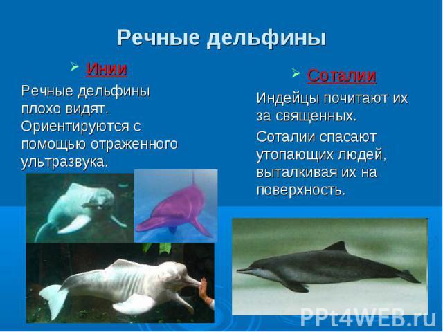 Инии Инии Речные дельфины плохо видят. Ориентируются с помощью отраженного ультразвука.