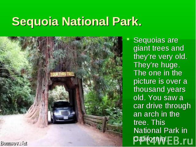 Sequoias are giant trees and they're very old. They're huge. The one in the picture is over a thousand years old. You saw a car drive through an arch in the tree. This National Park in California. Sequoias are giant trees and they're very old. They'…