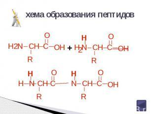 Схема образования пептидов