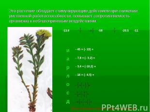 Это растение обладает стимулирующим действием при снижении умственной работоспос