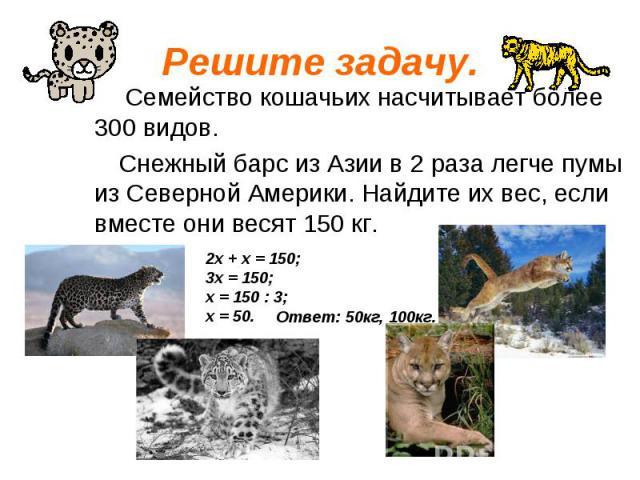 Семейство кошачьих насчитывает более 300 видов. Семейство кошачьих насчитывает более 300 видов. Снежный барс из Азии в 2 раза легче пумы из Северной Америки. Найдите их вес, если вместе они весят 150 кг.