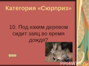 Категория «Сюрприз» 10. Под каким деревом сидит заяц во время дождя?