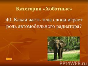Категория «Хоботные» 40. Какая часть тела слона играет роль автомобильного радиа