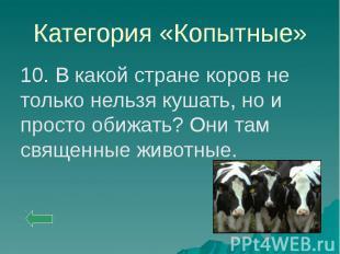 Категория «Копытные» 10. В какой стране коров не только нельзя кушать, но и прос