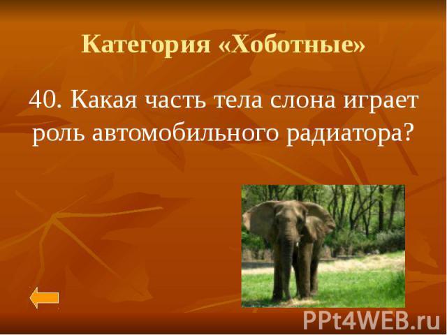 Категория «Хоботные» 40. Какая часть тела слона играет роль автомобильного радиатора?