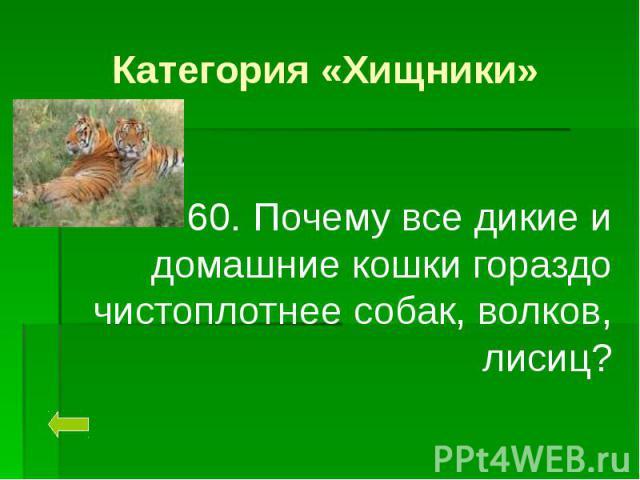 Категория «Хищники» 60. Почему все дикие и домашние кошки гораздо чистоплотнее собак, волков, лисиц?