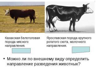 Можно ли по внешнему виду определить направление разведения животных? Можно ли п