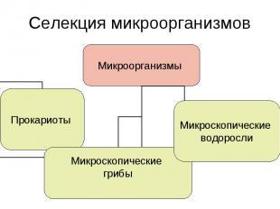 Селекция микроорганизмов