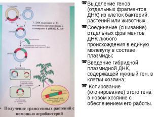 Выделение генов (отдельных фрагментов ДНК) из клеток бактерий, растений или живо