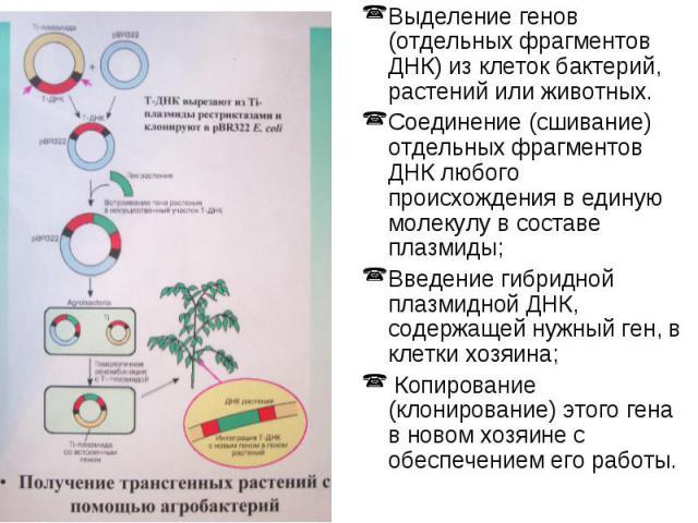 Выделение генов (отдельных фрагментов ДНК) из клеток бактерий, растений или животных. Выделение генов (отдельных фрагментов ДНК) из клеток бактерий, растений или животных. Соединение (сшивание) отдельных фрагментов ДНК любого происхождения в единую …