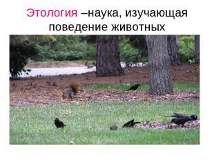 Этология –наука, изучающая поведение животных Наука, изучающая поведение животны