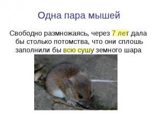 Одна пара мышей Свободно размножаясь, через 7 лет дала бы столько потомства, что