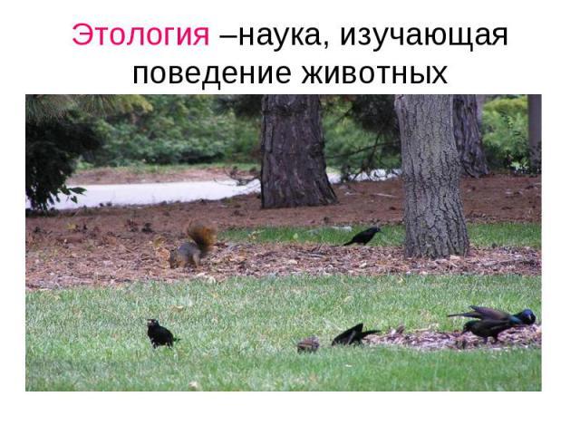 Этология –наука, изучающая поведение животных Наука, изучающая поведение животных