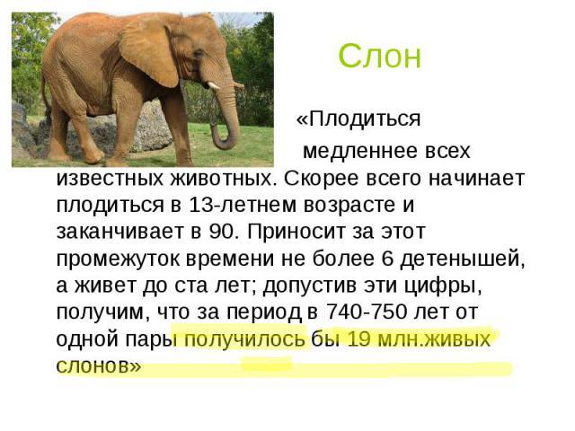 Слон «Плодиться медленнее всех известных животных. Скорее всего начинает плодиться в 13-летнем возрасте и заканчивает в 90. Приносит за этот промежуток времени не более 6 детенышей, а живет до ста лет; допустив эти цифры, получим, что за период в 74…
