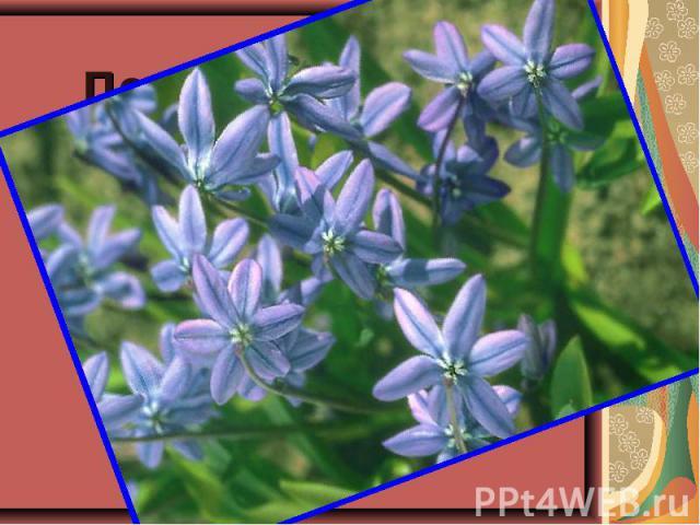 Под ногой в лесу трещит Под ногой в лесу трещит и хрустит валежник. Ищем мы цветок весны, Голубой……