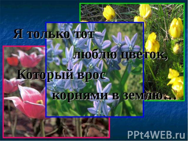 Я только тот Я только тот люблю цветок, Который врос корнями в землю…