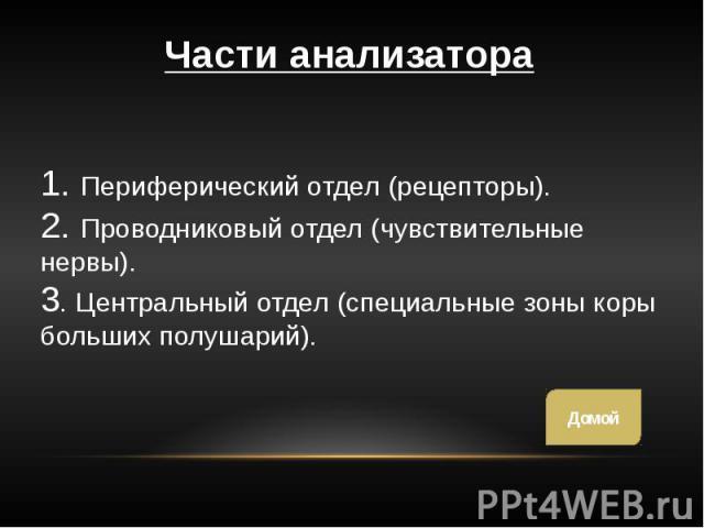1. Периферический отдел (рецепторы). 2. Проводниковый отдел (чувствительные нервы). 3. Центральный отдел (специальные зоны коры больших полушарий).