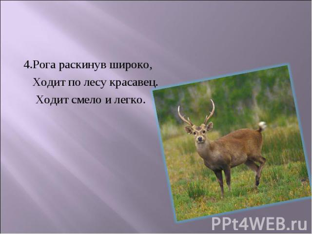 4.Рога раскинув широко, 4.Рога раскинув широко, Ходит по лесу красавец. Ходит смело и легко.