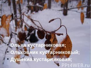 Ольха кустарниковая; Ольха кустарниковая; Ольховник кустарниковый; Душекиа куста