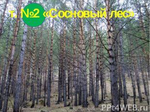 т. №2 «Сосновый лес»