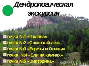 Дендрологическая экскурсия точка №1 «Поляна» точка №2 «Сосновый лес» точка №3 «Б