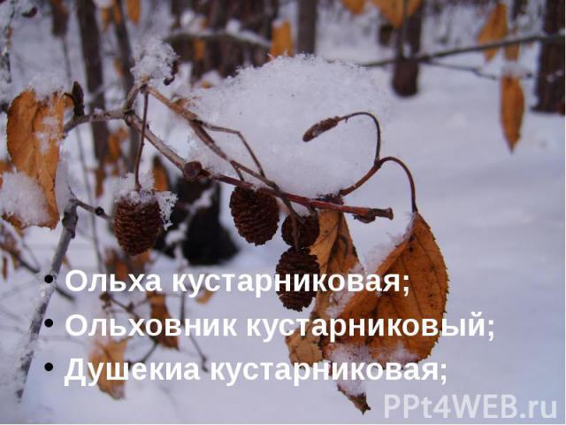 Ольха кустарниковая; Ольха кустарниковая; Ольховник кустарниковый; Душекиа кустарниковая;